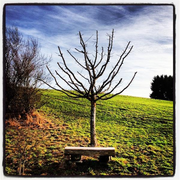 Eine Bank vor einem Baum ohne Blätter. Grünes Gras. Ein fast weißer Himmel.