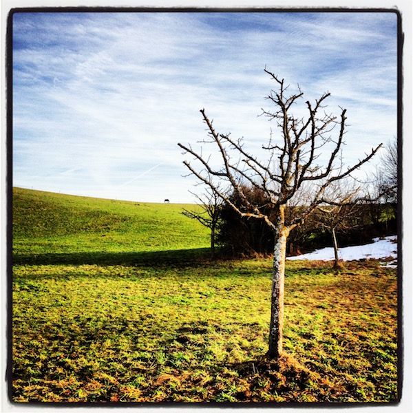 A tree with no leaves on a green field. An almost white sky. On the horizon, a horse is grazing.