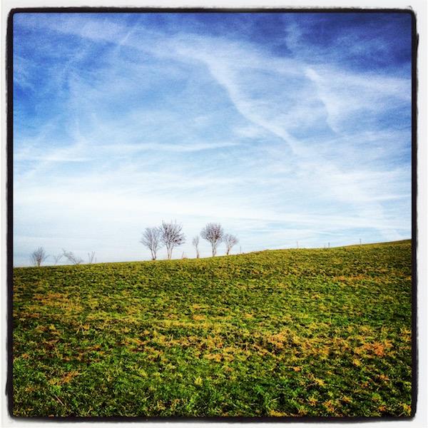 Grün-gelbe Wiese. Weiß-blauer Himmel. Am Horizont steht eine Reihe kahler Bäume.