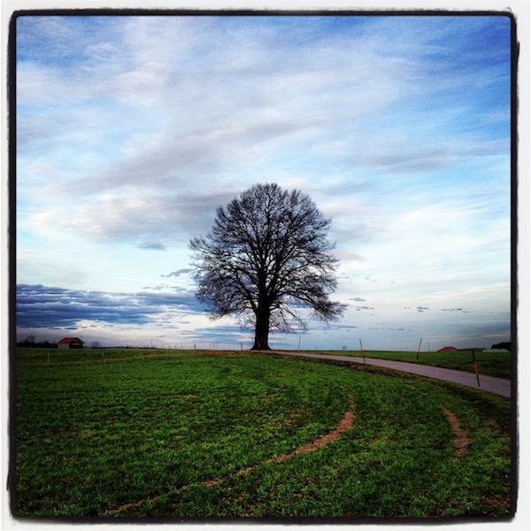 Grüne Wiese. Kahler Baum am Horizont. Weiß-blauer Himmel.