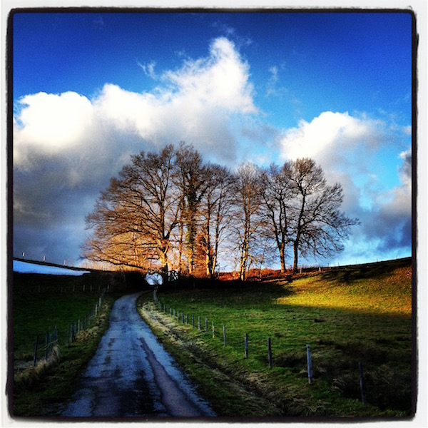 A path runs up a hill. Leafless trees. Green grass. White clouds in a blue sky.