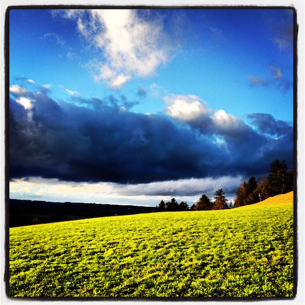 Shiny green field. Dark trees and hills on the horizon. Strong clouds in the blue sky.