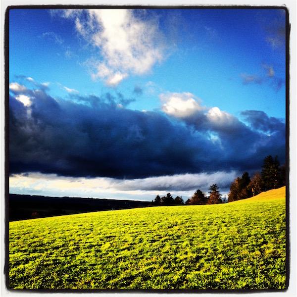 Leuchtend grüne Wiese. Dunkle Bäume und Hügel am Horizont. Kräftige Wolken im blauen Himmel.