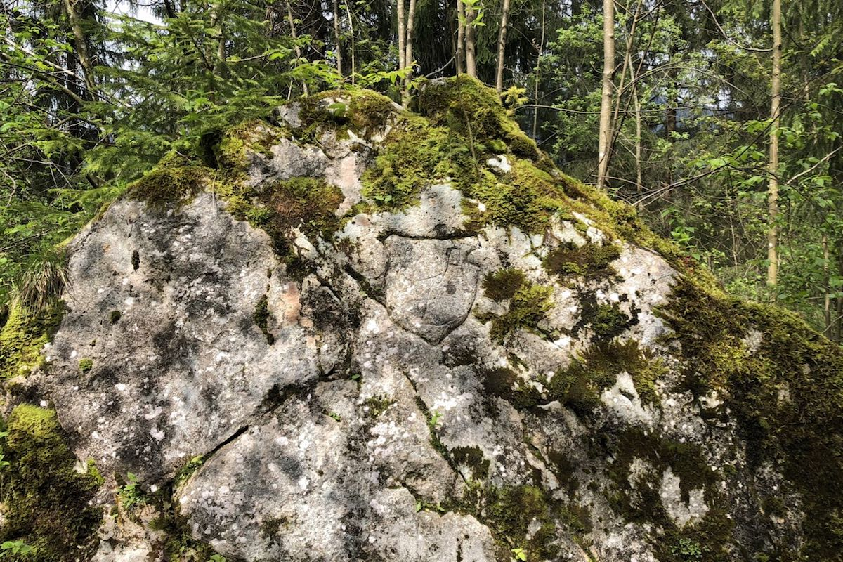 Light grey rock partly overgrown with moss in the sunhsine