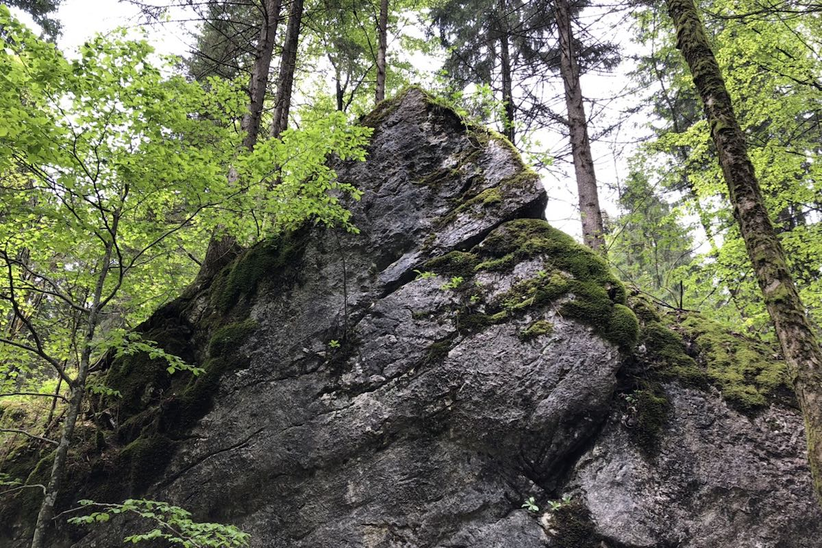 Dark grey rock partly overgrown with moss under deciduous and coniferous trees